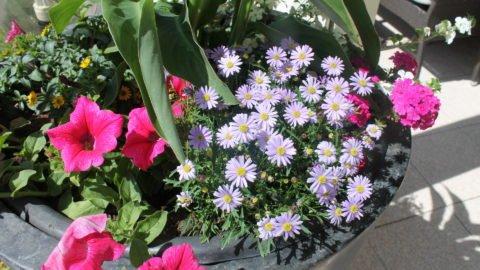 20140530 Blumenvase